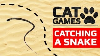 CAT GAMES - 🐍 CATCHING A SNAKE (ENTERTAINMENT VIDEOS FOR CATS TO WATCH)
