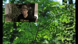 Zielony świat 01 – ZALWIT