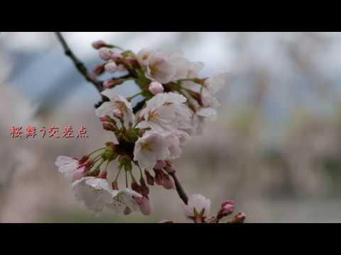 【ミク・ルカ・ラピス】桜舞う交差点【オリジナル】