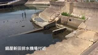 愛知県東浦町シーバススポット鍋屋新田排水機場付近