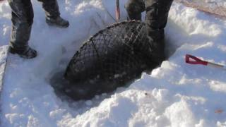 Nome: King Crabbing on Bering Sea Ice