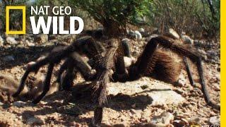 Spider Speed Dating | Wonderfully Weird