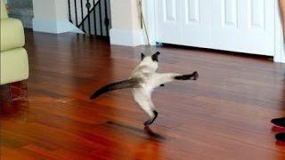 Смотреть онлайн Подборка: Смешные прыжки милых котиков