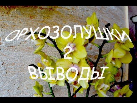 Выводы о золе. История пропавшей орхидеи. Пробежка по комментам.