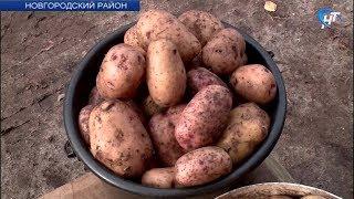 Аграрии Новгородской области бьются за урожай
