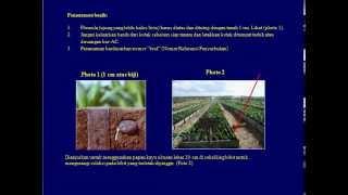 preview picture of video 'cara pembibitan kelapa sawit'