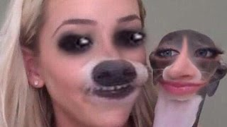PET FACE SWAPS?  YOUTUBER EDITION!