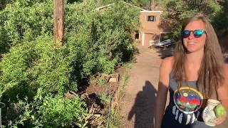 Urban Gardening in Colorado August 2019
