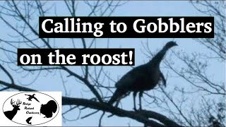 Turkey Hunting: How To Call To A Turkey On The Roost: - Ridge Raised Outdoors