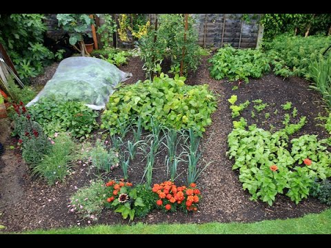 Small Garden mid summer, with timesaving tips for succession planting
