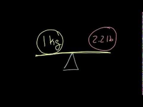 Harga protein untuk menurunkan berat badan