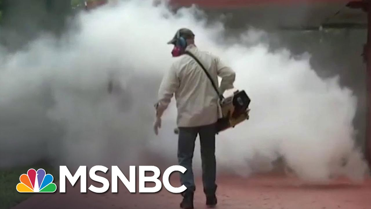 Health Officials: Zika Could Spread | MTP Daily | MSNBC thumbnail