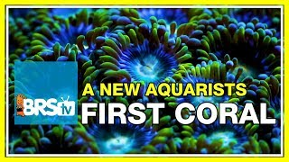 What would be the first coral we'd recommend for an aquarium hobbyist? | 52 FAQ