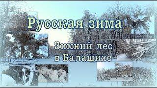 Русская зима. Russian winter. Зимний лес в Балашихе.