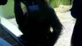 opicaci v zoo, pt2