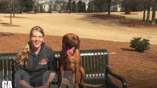 "10 Month Old Rhodesian Ridgeback ""Scout"" Video 