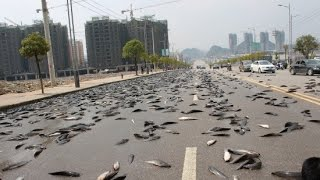 FISH RAIN IN THAILAND? JUNE 2, 2015 (EXPLAINED)