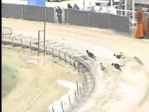 Race 44 - Anicare Animal Supply Stake Flite I