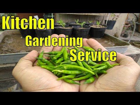 Roza Rekh Kr Video Shot Krna Bohat Mushkil Ho Gia || Kitchen Gardening Program