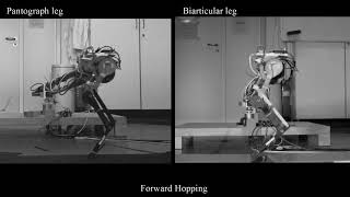 Biarticular Muscle-Tendon Structure in Hopping Robotic Leg