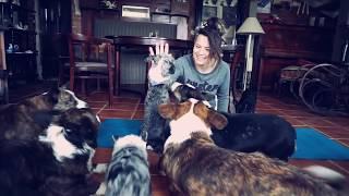ДОГА ЙОГА ЧЕЛЛЕНДЖ С СОБАКАМИ! Собаки и я пробуем собачью йогу догу