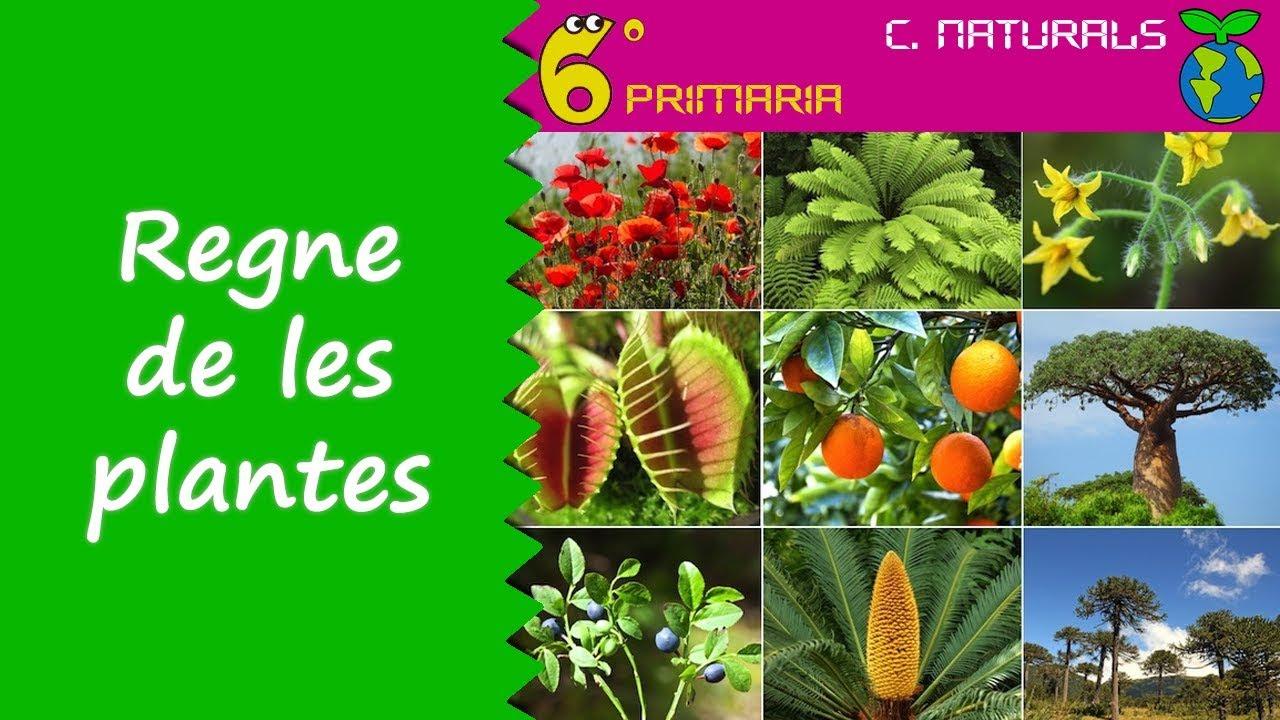 Regne de les plantes. Naturals, 6é Primària