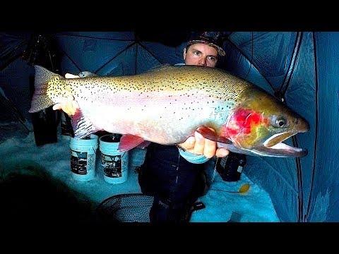 Isfiskeri efter regnbueørreder