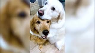 The Most Hilarious Pet Videos | Cutest Pet Stuff