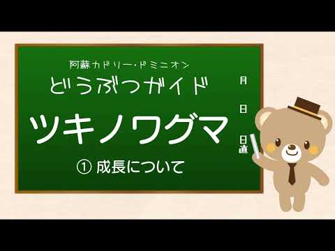 【カドリー どうぶつガイド】ツキノワグマ ① 成長について