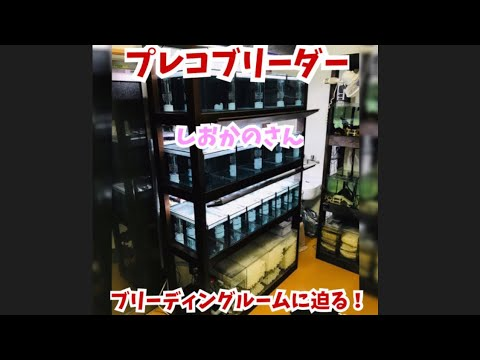 TALLMAN TV!!プレコブリーダー!しおかのブリード!ブリーディング部屋初公開!