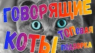 <p>Приколы с ГОВОРЯЩИМИ котами - Самая ТОПовая подборка!Друзья не забывайте подписываться на канал и ставить лайки !В этом видео я собрал самые лучшие моменты с говорящими котами ! Это супер смотрите до конца !Топовая Отборка самых