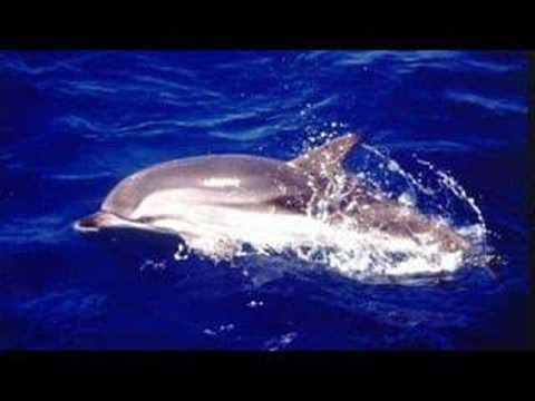 Kaarten met dolfijnen, The Dolphin