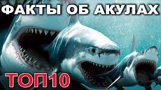 АКУЛЫ! ТОП 10 ШОКИРУЮЩИХ ФАКТОВ ОБ АКУЛАХ!