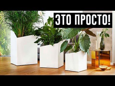12 самых красивых и неприхотливых комнатных растений, которые сделают ваш дом уютнее!