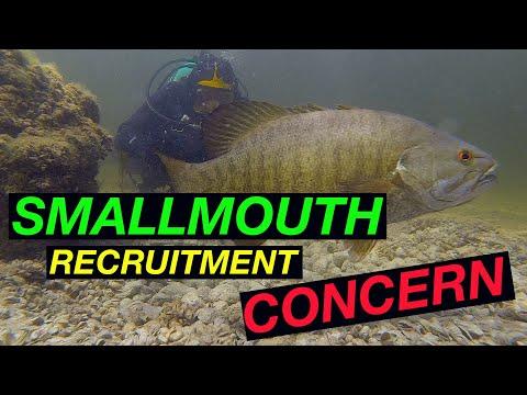 Smallmouth Bass Recruitment Concern