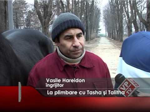 La plimbare cu Tasha şi Talitha