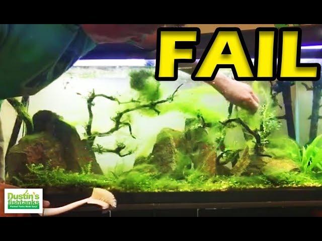 No Maintenence Tank -FAIL- Aquarium Algae Mess Causes LIVE