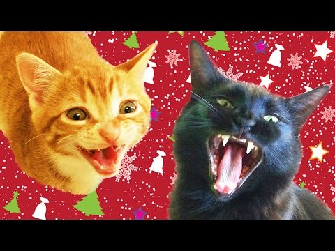 Cats & Kittens Sing Christmas Song