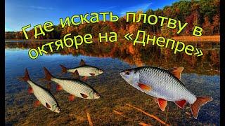 Какая рыба ловится в октябре на днепре