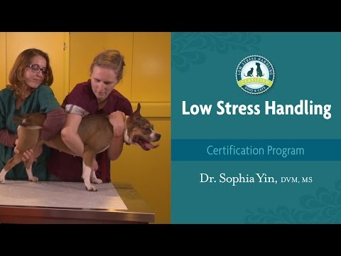 How do you move a dog from standing to lateral?