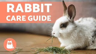 How to TAKE CARE of a RABBIT 🐰 Complete RABBIT CARE Guide