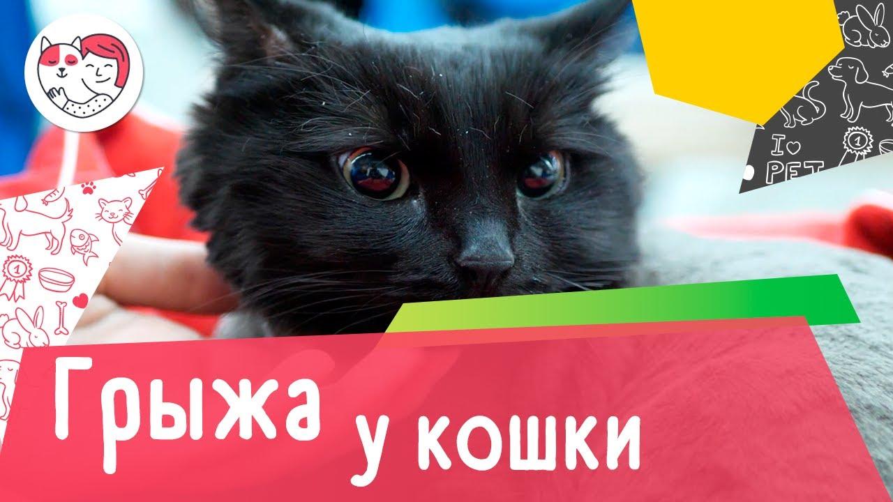 5 распространенных причин появления грыжи у кошки