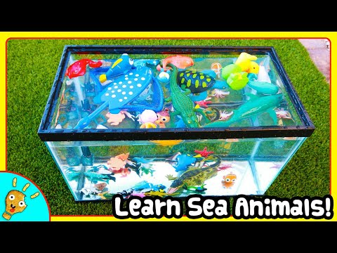 Learn SEA Animals In Fish Tank for Kids with Squishee Nugget