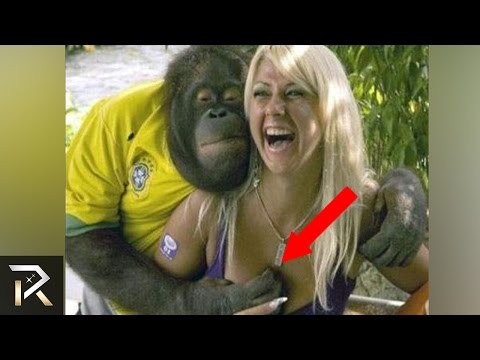10 Most Inappropriate Animal Encounters!