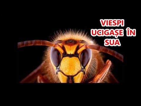 Acuitatea vizuală după intervenția chirurgicală a cataractei