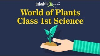 Class 1 Science-Demo