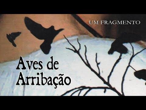 Um fragmento de Aves de Arribação