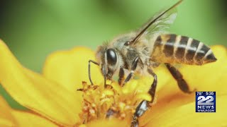 How to keep bees, wasps away from your home