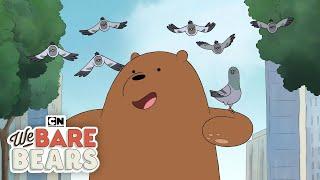 We Bare Bears | Pigeons | Cartoon Network