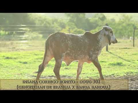 Insana Córrego Bonito - DOUG 302